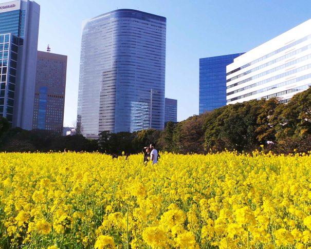 Idée de balade à Tokyo : Balade dans le jardin Hama-Rikyū à Tokyo, Japon