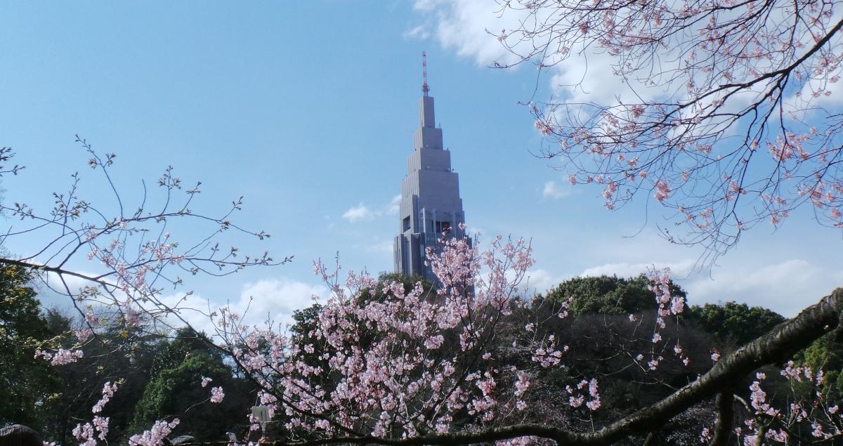 Parc à visiter à Tokyo durant Hanami