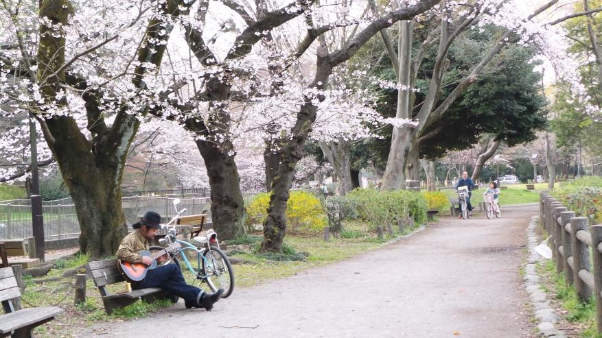 La rivière Zenpukuji, un spot calme pour les sakura, Tokyo, Japon.