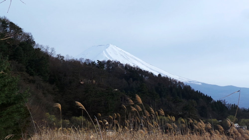Splendide vue sur le mont Fuji de Kawaguchiko, près de Tokyo