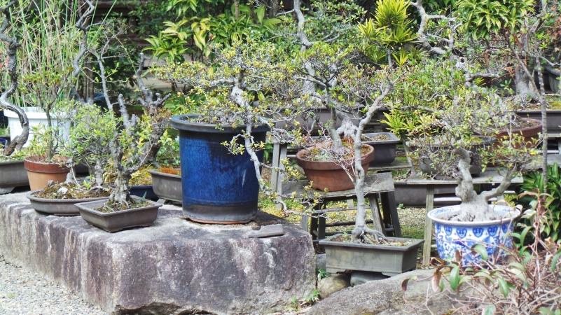 Temple Shinsei ji pots