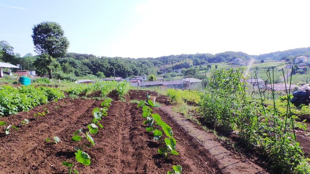 Charmant village rural dans les environs de la forêt de Totoro.