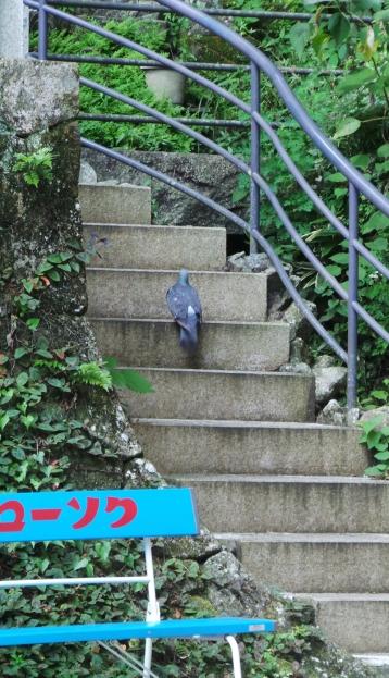 Visite guidée du temple Nanzoin à Fukuoka par Léon le pigeon.