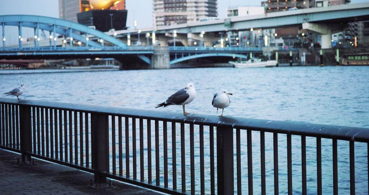 Idées d'activités à Tokyo