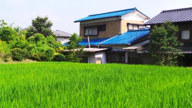 Les belles rizières de Dazaifu, dans la campagne de Fukuoka