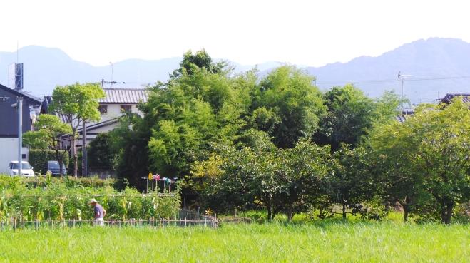 Traversée d'un petit village, avant de rejoindre la gare à Dazaifu, Fukuoka