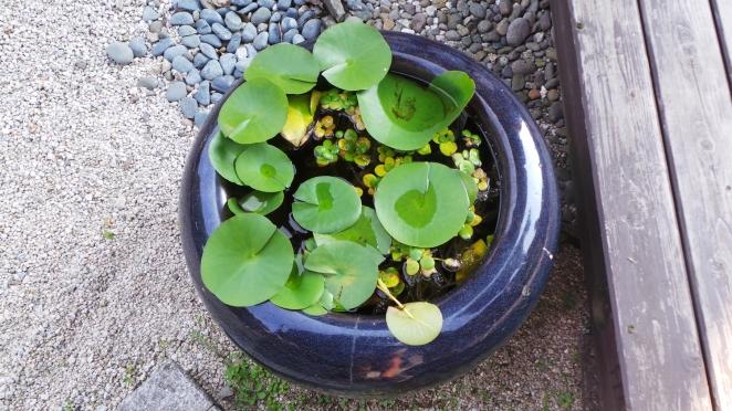 Belle plante dans le jardin du temple Kaidan-in à Dazaifu, Fukuoka
