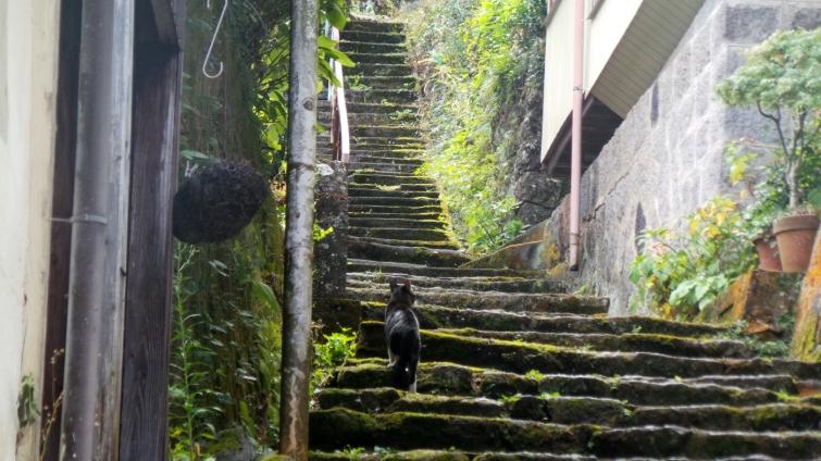Chat sur les marches d'une ruelle du village de Yonohira près de Yufuin, Kyushu