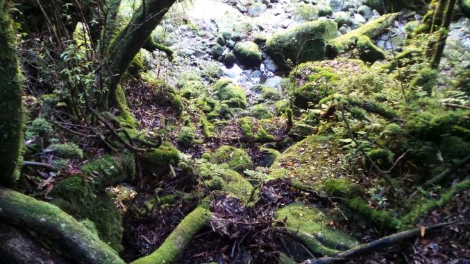 """Forêt """"Princesse Mononoké"""" sur l'île de Yakushima, Japon"""
