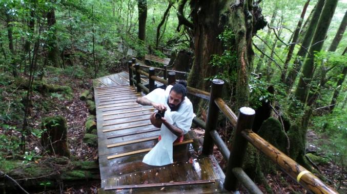 Dans le parc naturel de Yakusugi land sur l'île de Yakushima, Japon.