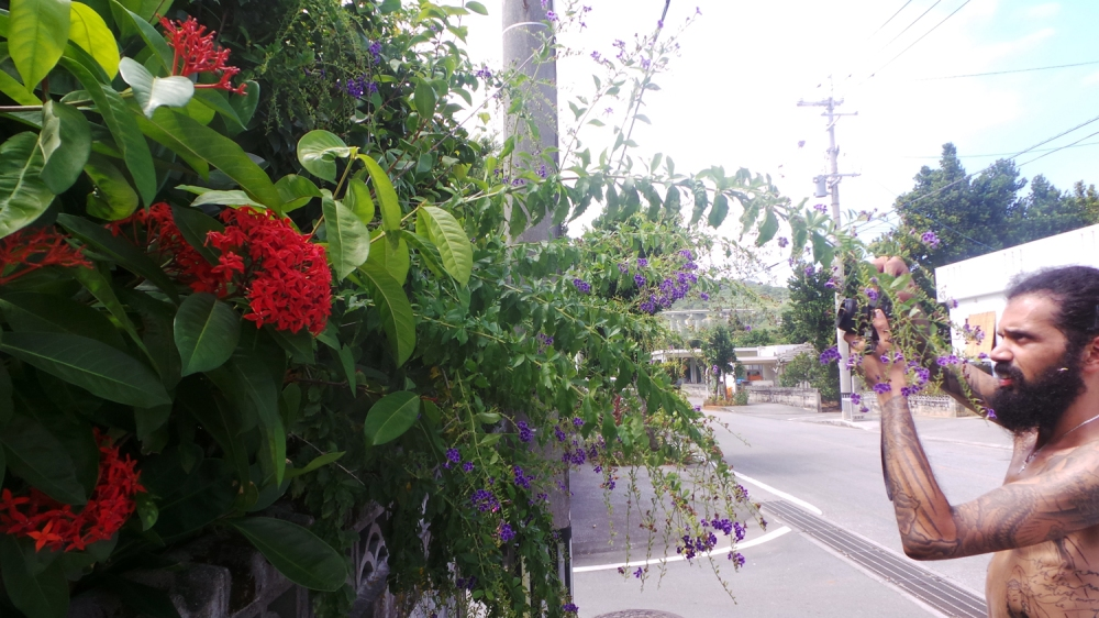 Fleurs tropicales sur l'île de Kumejima, Okinawa