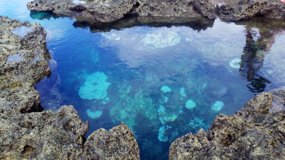 Piscine de poissons tropicaux sur l'île de Kumejima, Okinawa