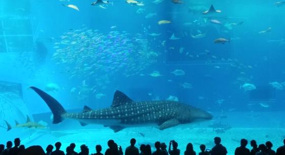 Bassin des requins-baleine à l'aquarium Churaumi d'Okinawa