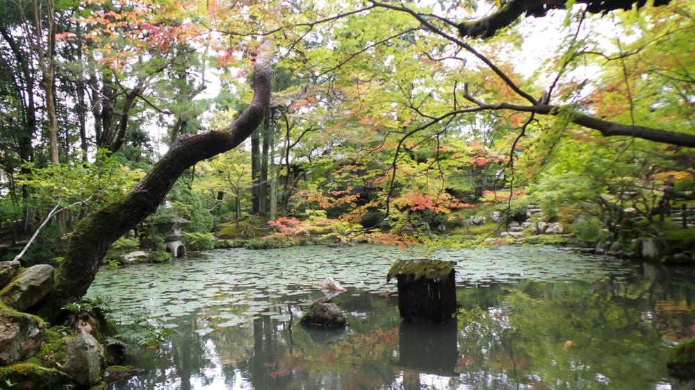 Momiji au jardin Riko-gyen, Kyoto, Japon.