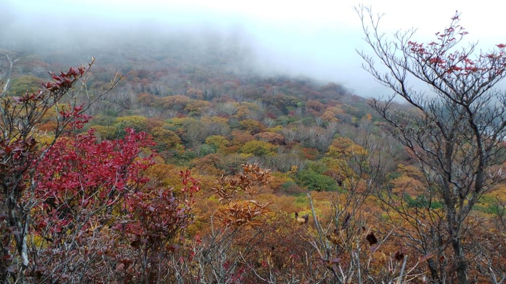 Koyo ou les couleurs de l'automne au mont Akagi, près de Tokyo, préfecture de Gunma, Japon.