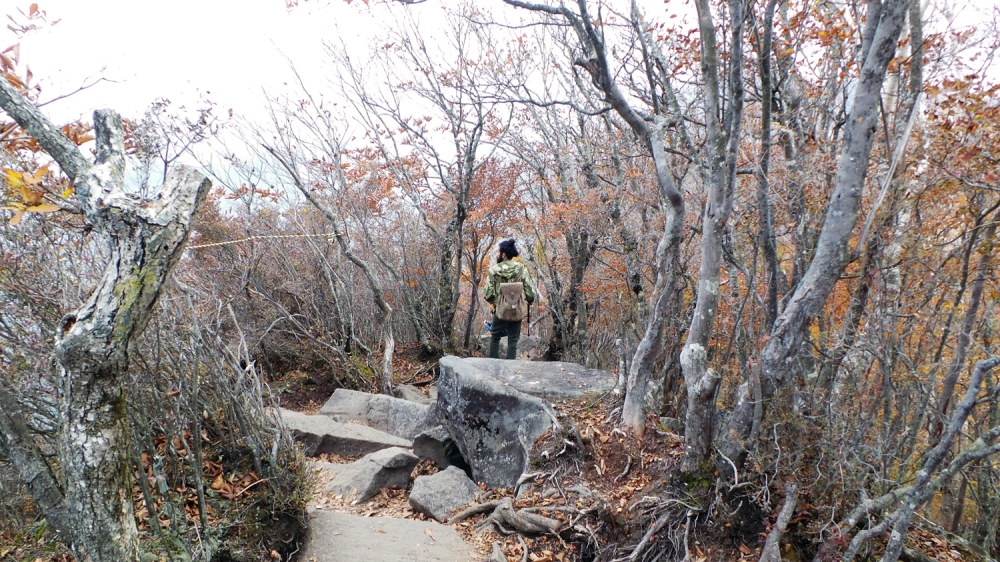 Randonnée au mont Akagi, près de Tokyo, préfecture de Gunma, Japon.