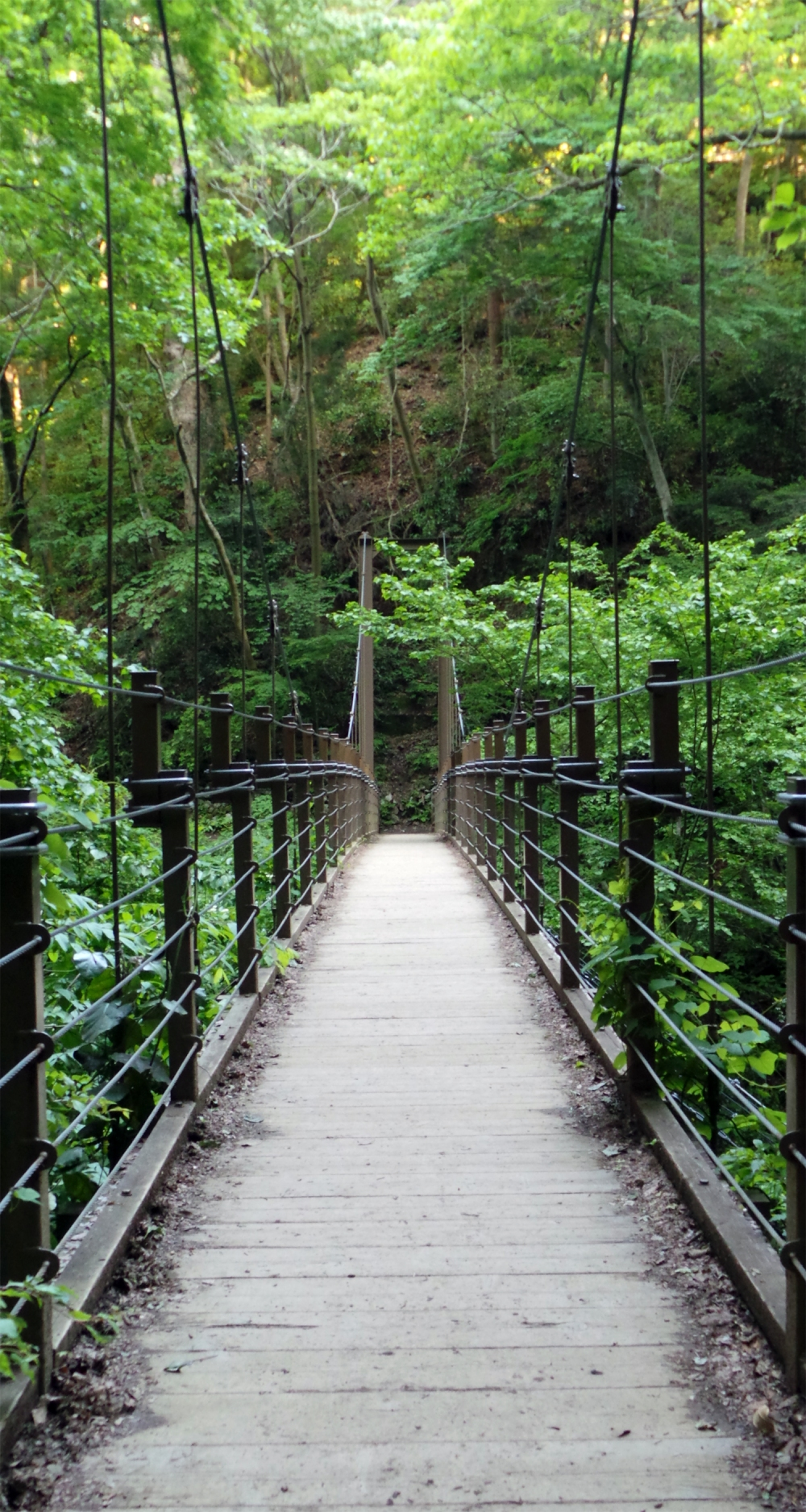 Pont sur la route d'une randonnée au mont Takao, Tokyo, Japon.