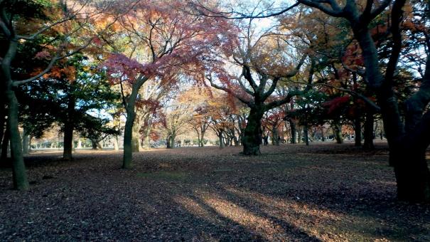 Le parc de Yoyogi à Tokyo, Japon