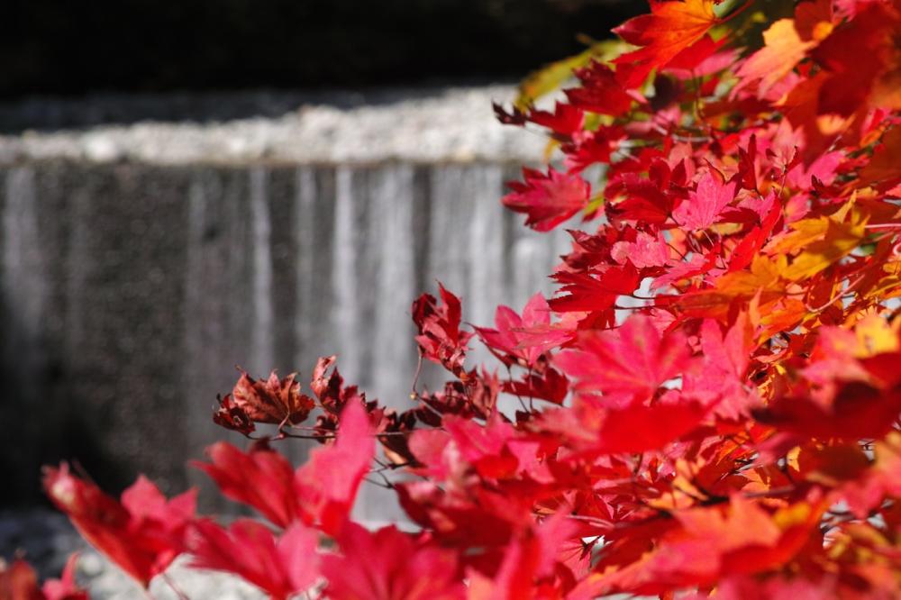 Randonnée d'automne dans les gorges de Nishizawa près de Tokyo, Japon.