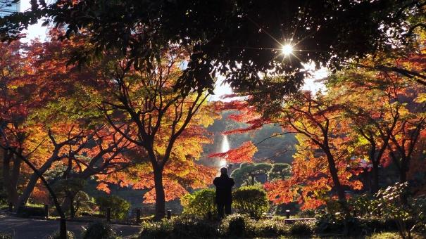 Automne au parc Hibiya à Tokyo, Japon