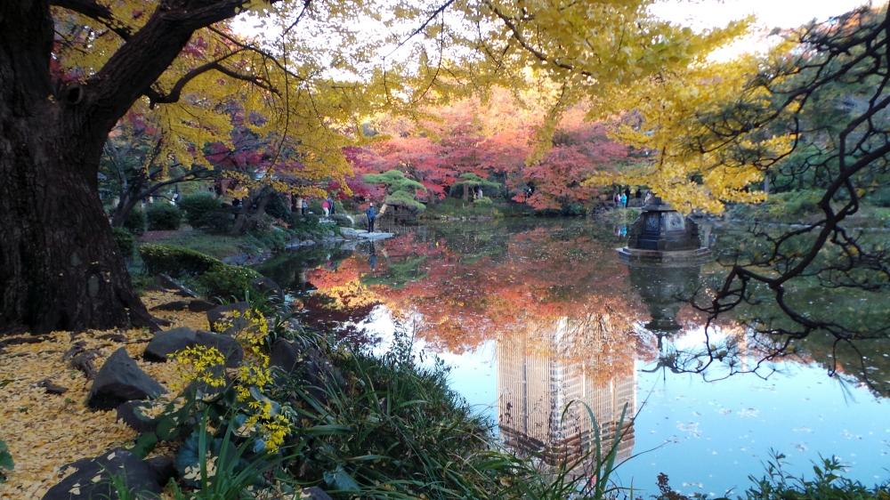 Koyo ou les couleurs de l'automne au parc Hibiya, Tokyo, Japon.