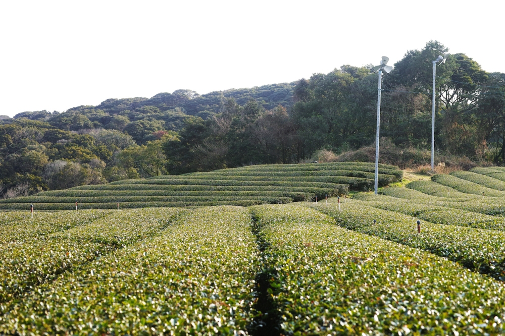Expérience accueil paysan minpaku au Japon.