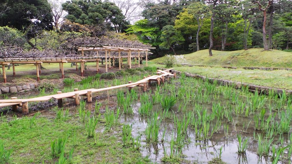 Les rizières du jardin Koishikawa Korakuen, Tokyo, Japon.