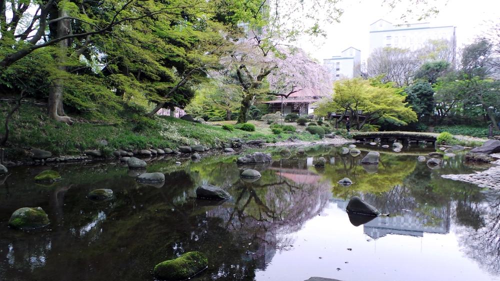 Cerisiers en fleurs au jardin Koishikawa Korakuen, Tokyo, Japon.