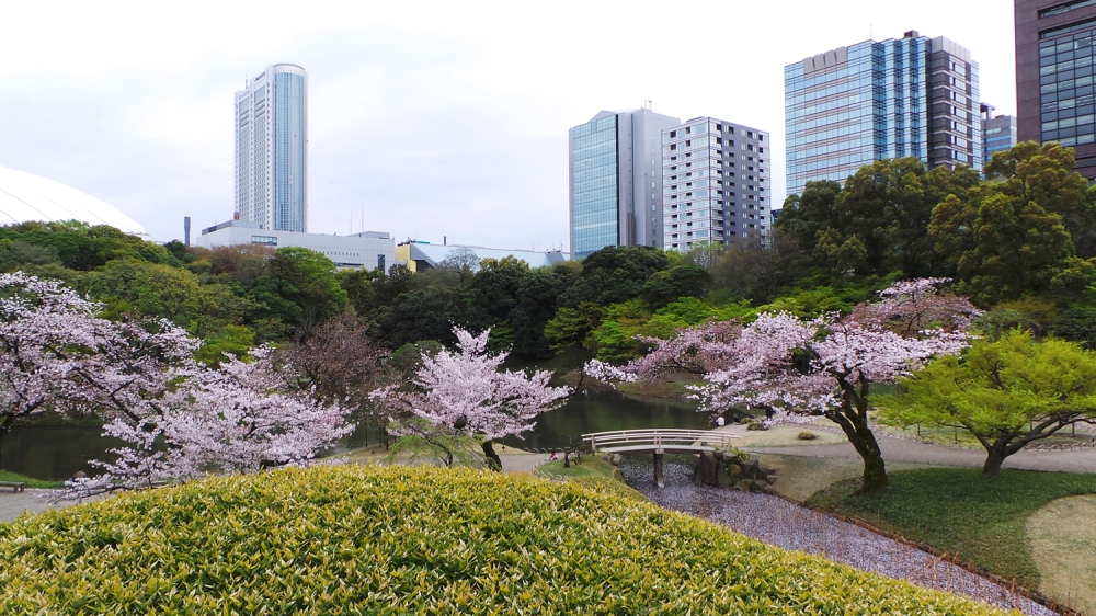 Visite du jardin Koishikawa Korakuen pendant Hanami, Tokyo, Japon.
