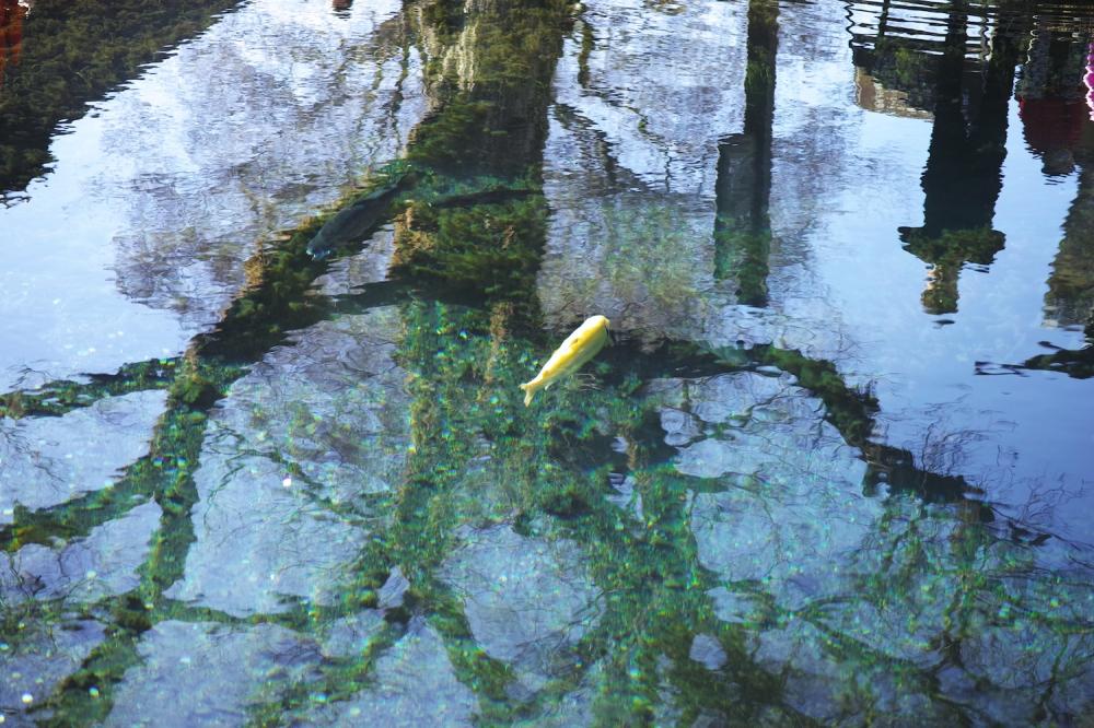 Étang aux eaux transparentes venant du Fuji, au village Oshino Hakkai, Japon.