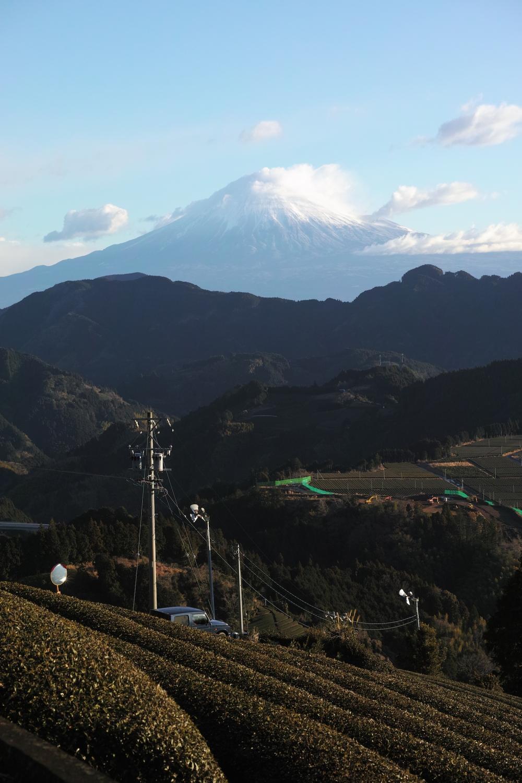 Fuji et champs de thé vert à Shimizu Yoshihara, montagnes de Shizuoka, Japon