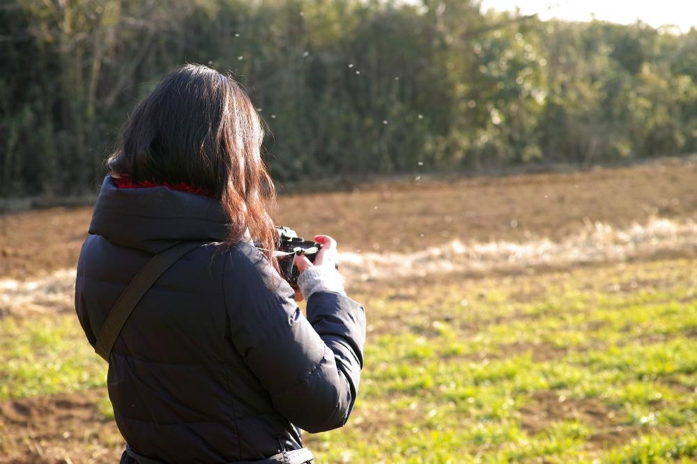 Reportage photo dans les champs à Kashima, près de Tokyo, Japon.