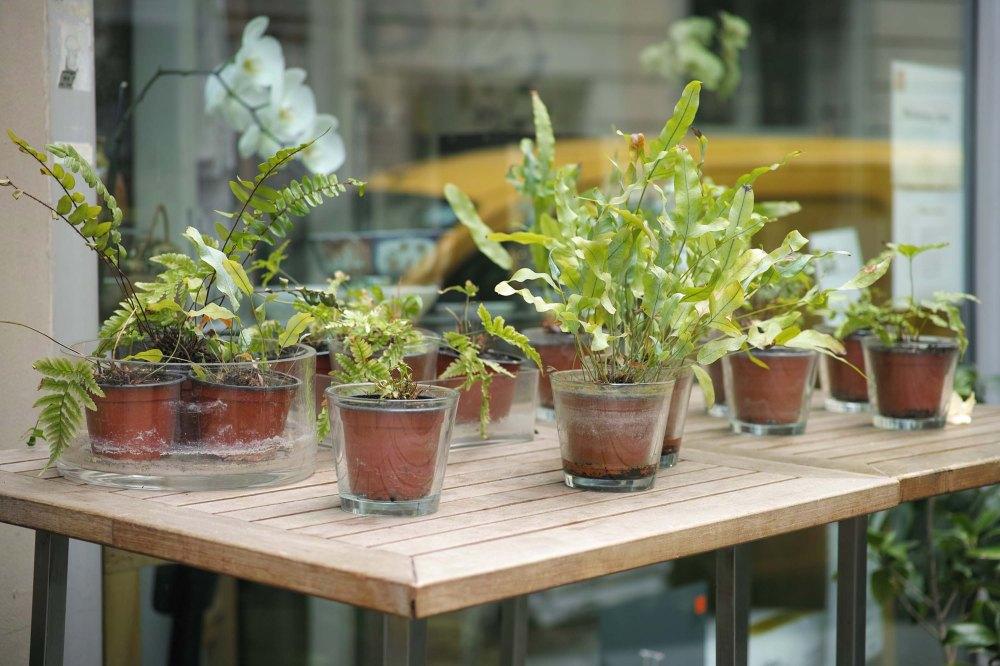 Jolies plantes devant la boutique japonaise Issé à Paris