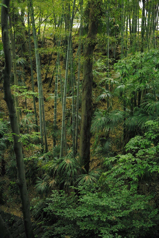 La vallée de Todoroki, la forêt à Tokyo dans le quartier de Setagaya