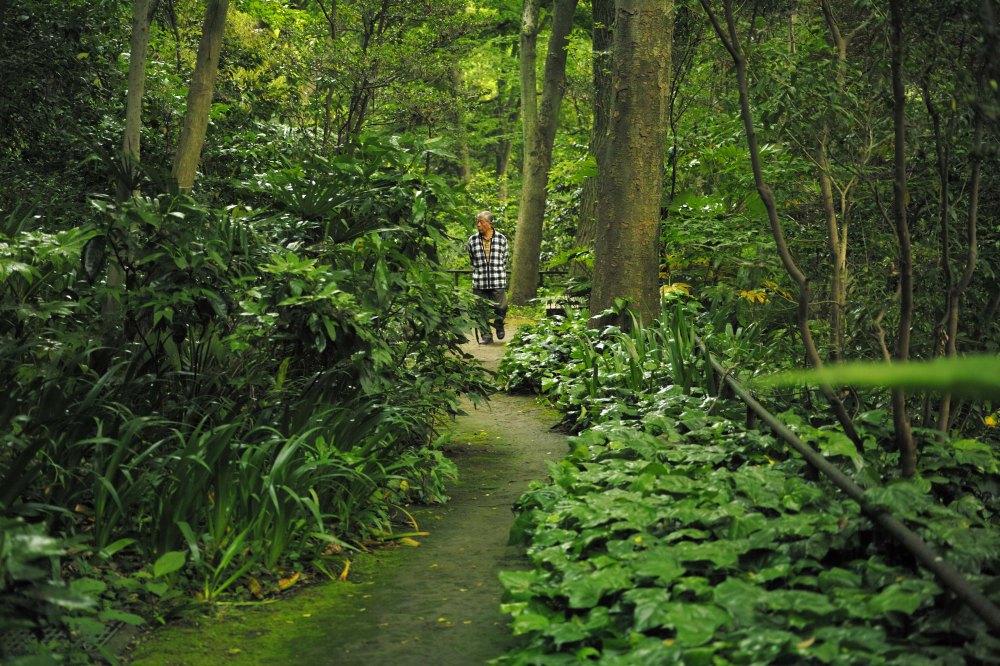 Promenade dans la vallée de Todoroki dans le quartier de Setagaya à Tokyo