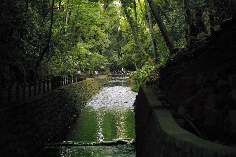 À l'ombre de la vallée de Todoroki dans le quartier de Setagaya à Tokyo