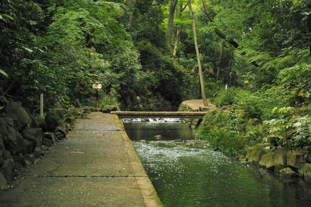 Le long de la rivière Yazawa dans la vallée Todoroki à Tokyo