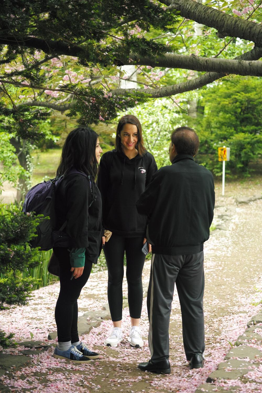 Rencontre sous les sakura au jardin botanique de Sapporo, île d'Hokkaido, Japon.