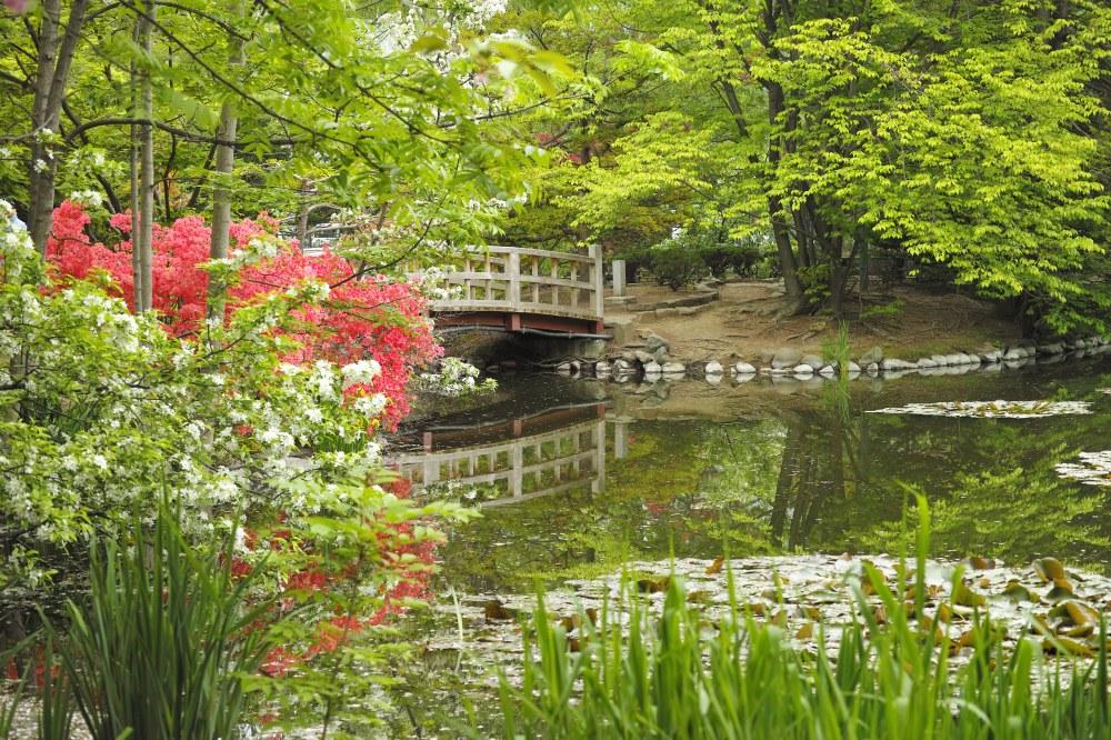 Étang au jardin botanique de Sapporo, île d'Hokkaido, Japon.