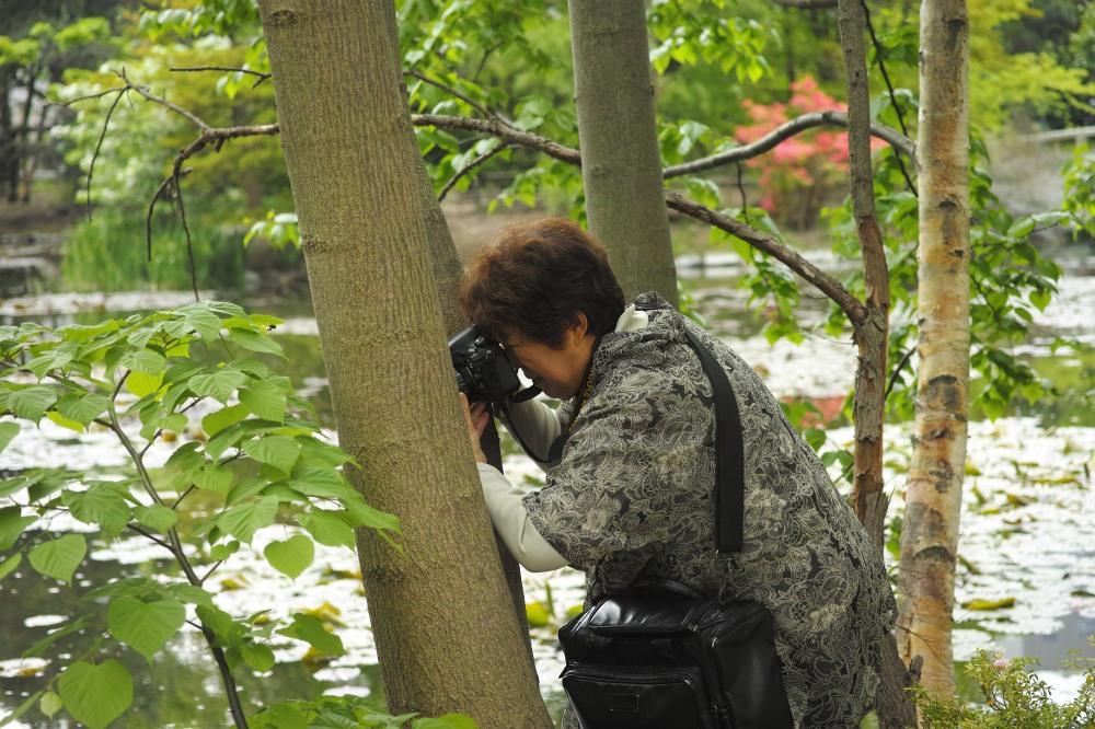 Photographe au jardin botanique de Sapporo, île d'Hokkaido, Japon.