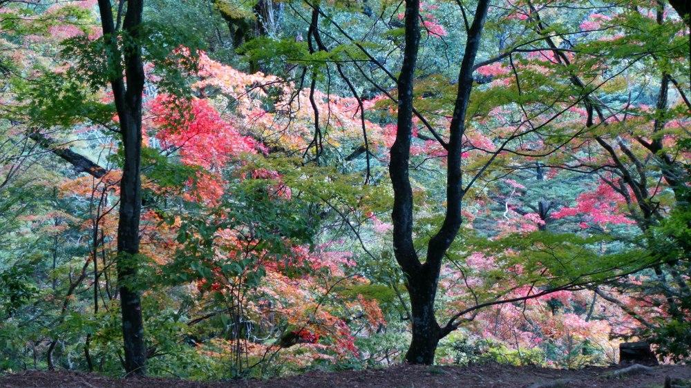 Koyo, les couleurs de l'automne à Takayama, Japon