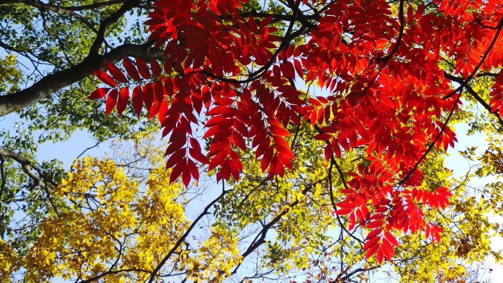 Où voir les couleurs de l'automne à Tokyo ?