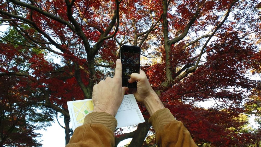 Où profiter des couleurs de l'automne à Tokyo, Japon ?