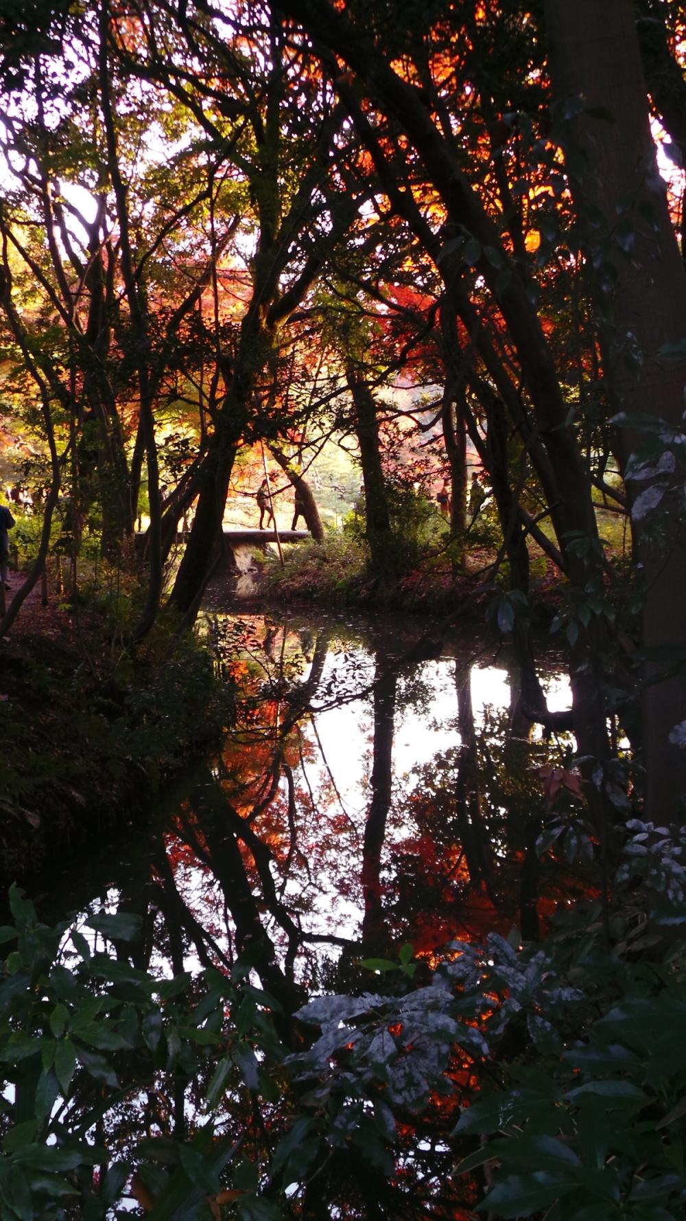 Parc où profiter des couleurs de l'automne à Tokyo, Japon